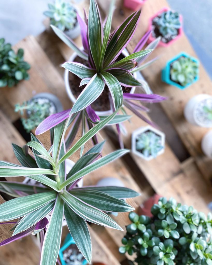potted plants online malaysia