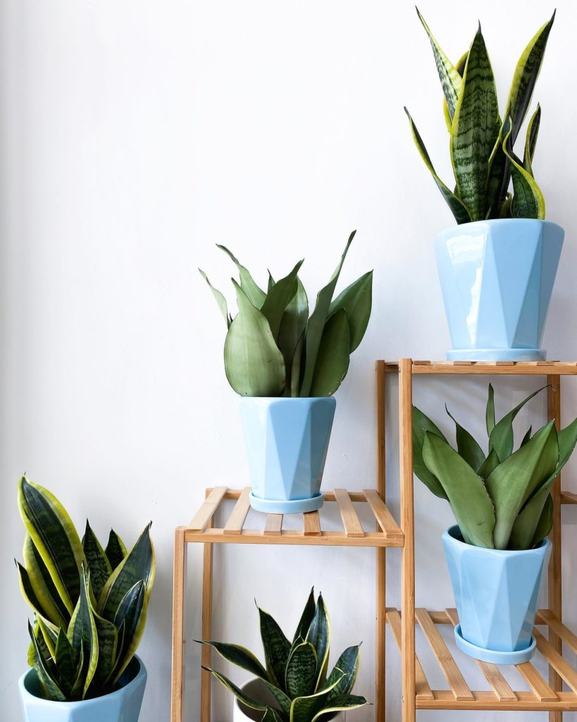 potted plants Malaysia